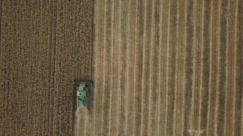 the Harvester Collects Grain