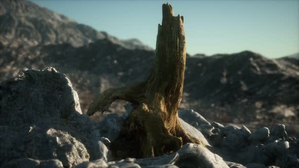 Thumbnail for Dead Pine Tree at Granite Rock at Sunset
