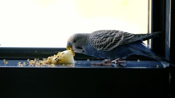 Iss Vogel