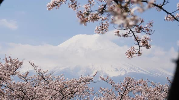 Thumbnail for Mountain And Cherry Blossom