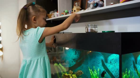 Little Girl Child At Home Feeds Aquarium Fish