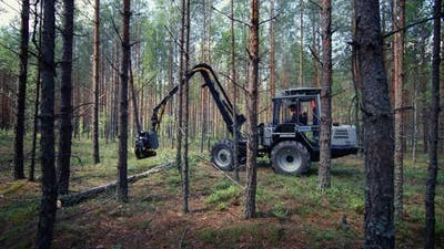 The tractor is sawing wood with a special saw, industrial wood processing.