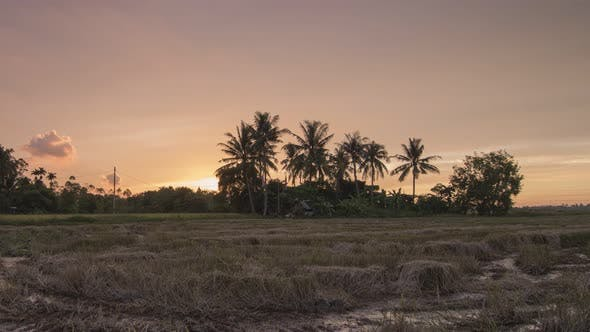 Timelapse sunset of rice paddy field during sunset