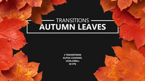 Переходы осенних листьев