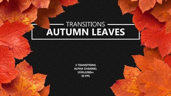 Thumbnail for Autumn Leaves Transitions