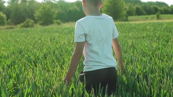 Thumbnail for Child Walks Across Wheat Field