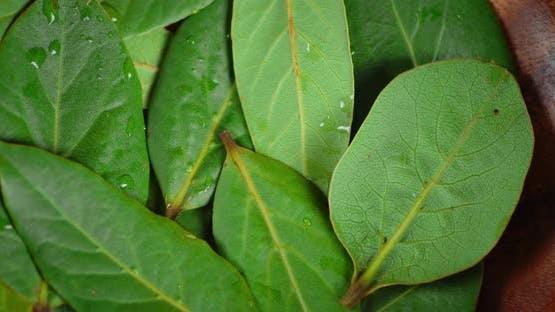 Bay Leaf on Plate Slowly Rotates.