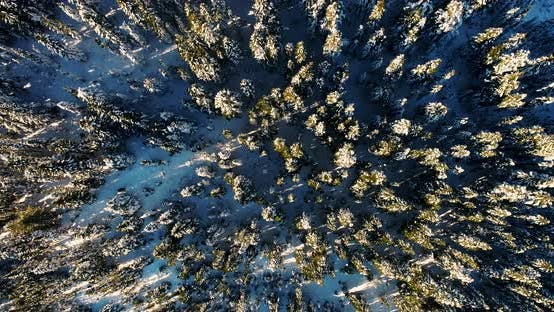Thumbnail for Snow Forest Texture Straight Down Above View From Aerial Perspective Midwinter Sun Shadows