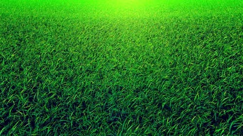 Flying On Grass 01 HD