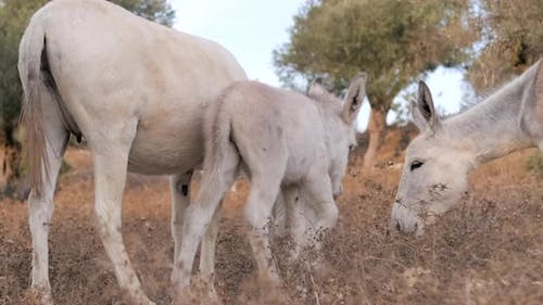 A donkeys family grazing in the countryside