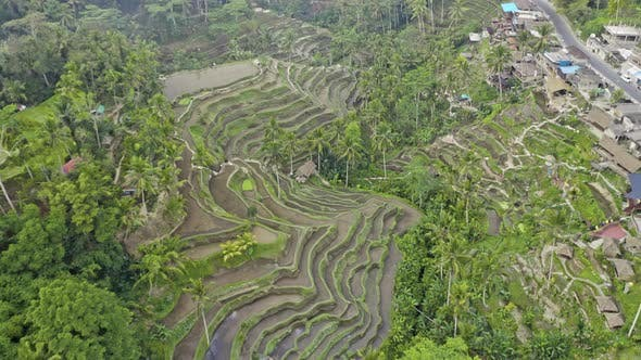 Drone Over Tegalalang Rice Terraces And Landscape