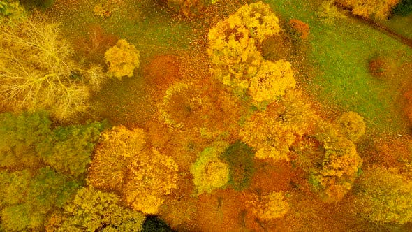 Thumbnail for Top down view over irish forest in autumn