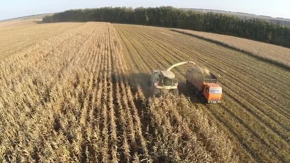 Luftaufnahme von Landmaschinen, die Mais ernten