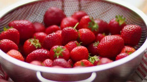 Freshly Harvested Strawberries
