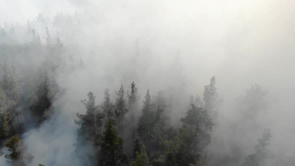 Forest Fire with Thick Black Smoke