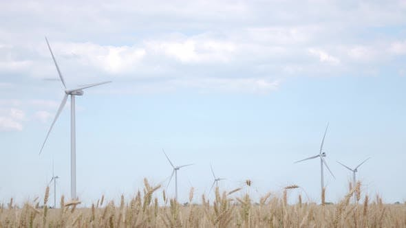 Thumbnail for Powerful Turbines Generate Electricity on the Sky Background Surrounded By Yellow Wheat Ears