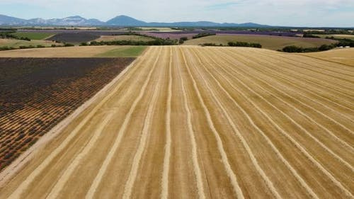 Harvested Wheat Agriculture Field