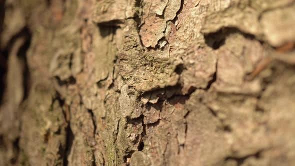 Thumbnail for Macro Bark Tree 4