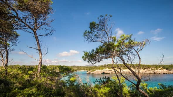Thumbnail for pines trees forest mallorca nature environment