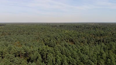 Aerial Drone Shot of Forest