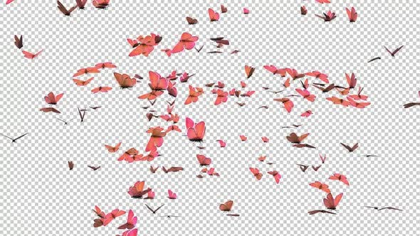 Butterfy Swarm - Rosa Flügel - schneller Übergang