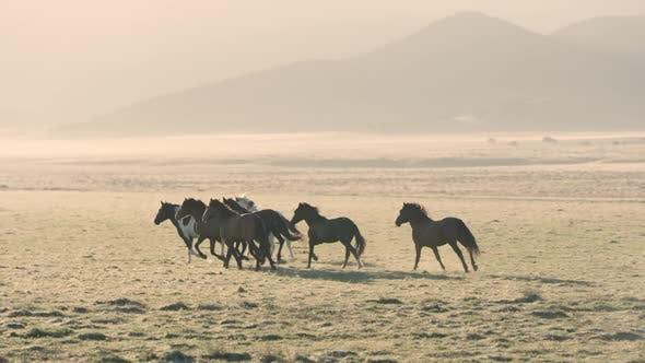Small group of wild horses running across golden field