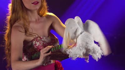 Circus Show with Pigeons