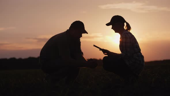 Cover Image for Man and Woman Farmers Working in the Field at Sunset. On the Field Young Shoots of Corn