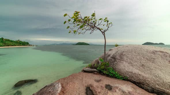 Thumbnail for View of the seascape and a growing tree on the rocks