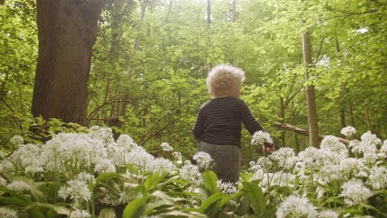 Little Boy and Sunbeam in the Forest Surrounded By Tall Trees