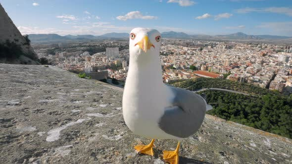 Thumbnail for Close Up Wide Shot of Seagull in Tourist Spot