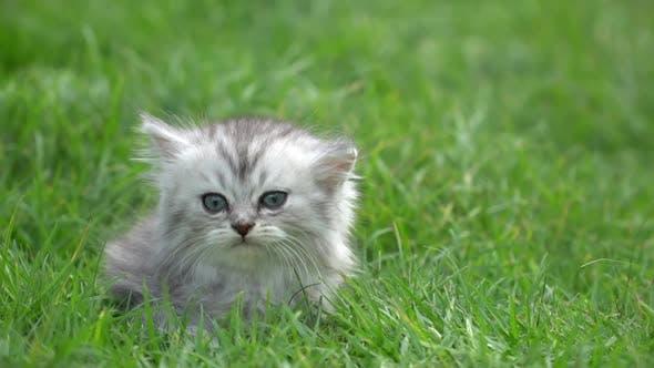 Cute Kitten Sitting On Green Grass