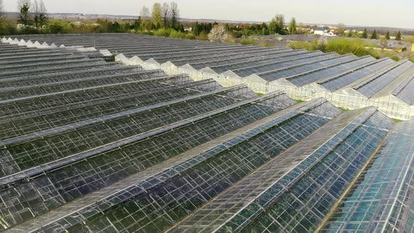 Thumbnail for Large Industrial Greenhouses. Flight Over Greenhouses in Abandoned Condition. Growing Vegetables and
