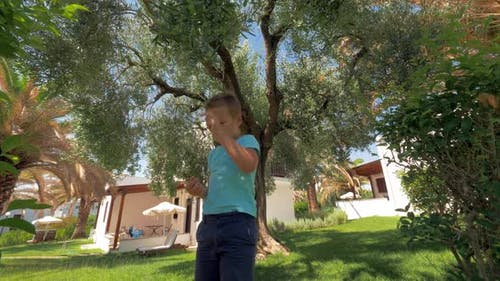 Child picking up olives from the tree in garden