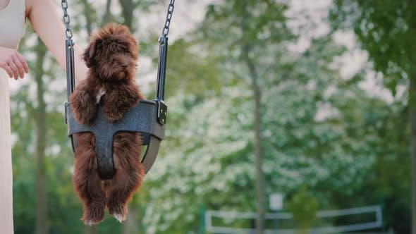 Cover Image for Woman Rolls Her Puppy on a Swing in the Park