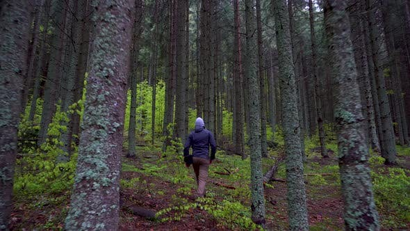 Thumbnail for Man walking in the dark mountain forest in spring season.