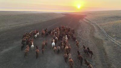Wild Horses Running