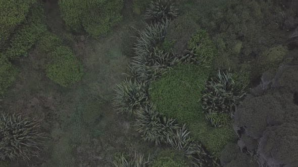 Thumbnail for Flying above foliage