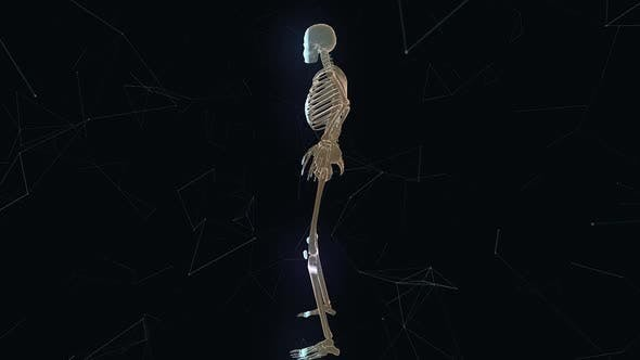 Man Skeleton System V1 Hd