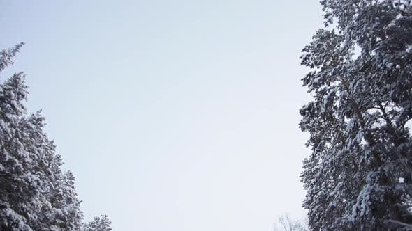 Thumbnail for Frosty Morning on the Way to the Ski Resort