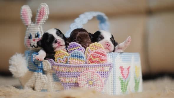 Thumbnail for A Group of Puppies in the Easter Basket
