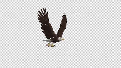 Bald Eagle with Salmon Fish - 4K Flying Loop - Side Angle