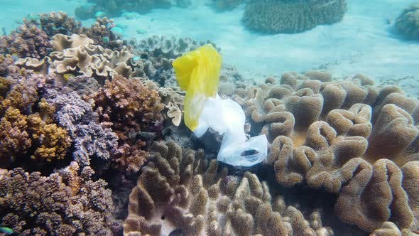 Thumbnail for Beautiful Coral Reef Polluted with Plastic Bag.