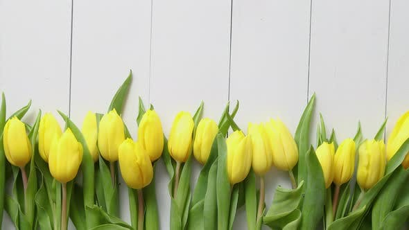 Thumbnail for Row of Fresh Yellow Tulips on White Wooden Table