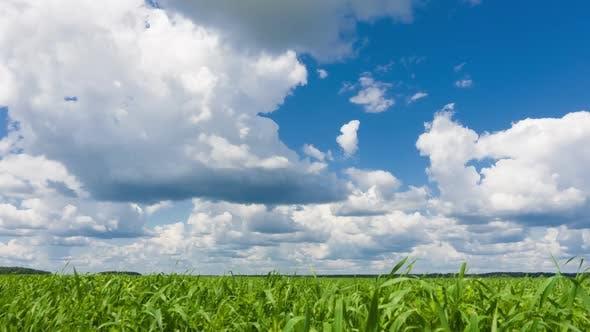 Beautiful Time Lapse, Sky and Green Fresh Grass. Qualitative Footage, No Flicker, No Birds.