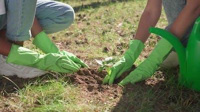 Females Ecoactivist Planting Plants Volunteer Work for Nature Conservation