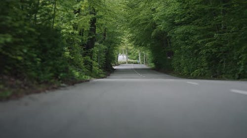 Traveling On Empty Tree Lined Road