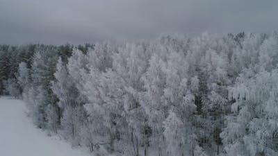 Winter Landscape with Forest, Field. Winter Landscape