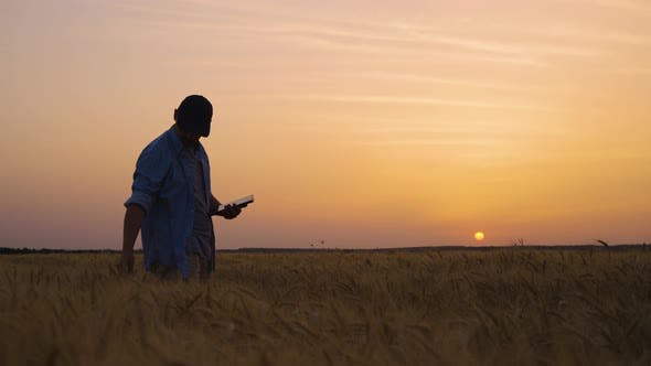 Farmer Using Tablet for Control of Crops