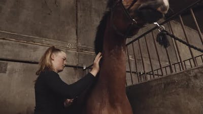 Young Woman Grooming Horse In Stables